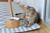 Bamboo Wooden Pet Food Tray - ZM7608C