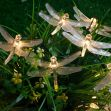 Christmas Day Lanterns LED Dragonfly lamp string 5M - warm white light
