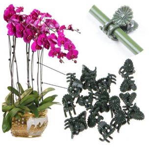 Gardening flower orchid - butterfly orchid clip 50/pack